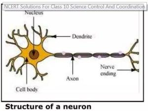 Class 10 Science Part 1