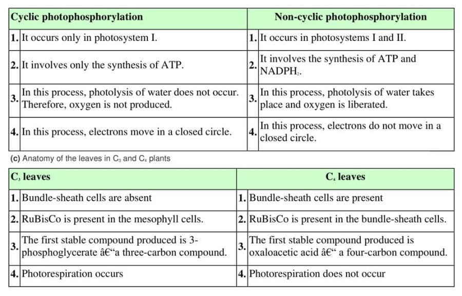 ncert solutions for class 11 biology chapter 13 photosynthesis in higher plants 5