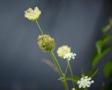 weedsweb
