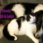 maddi-gabbi-best-friends-june-2015-1.jpg