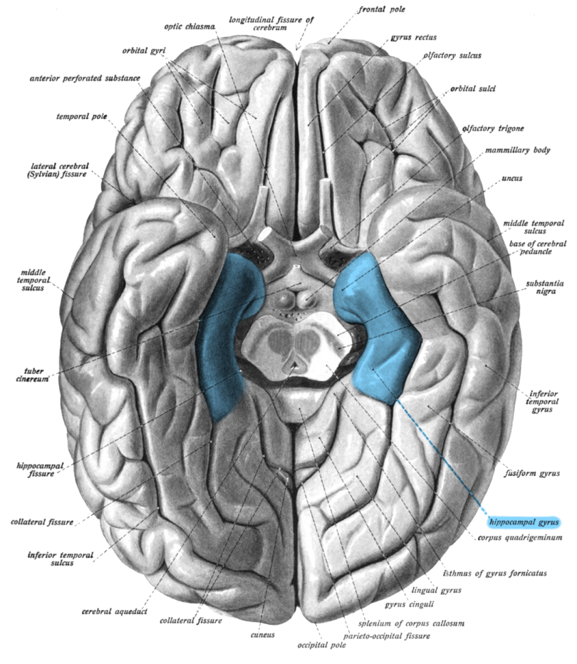 how to find parietal tubercle