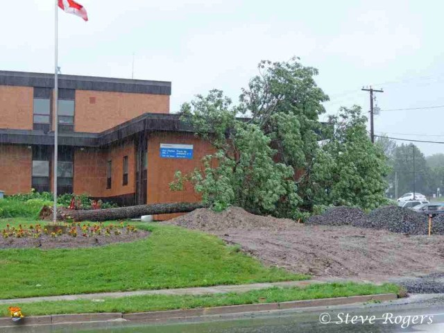 Tree uprooted by Hurricane Arthur in front of the York Street Fire Station in Fredericton