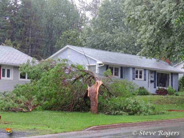 Tree damaged on Canterbury Drive in Fredericton