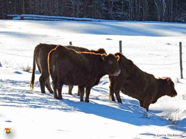 winter walk 022