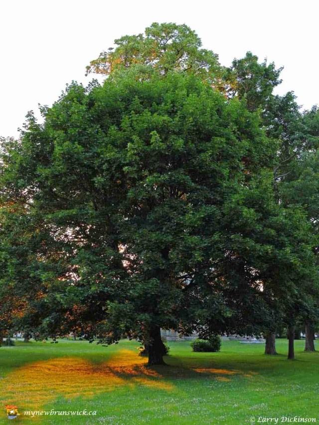 sunlittree