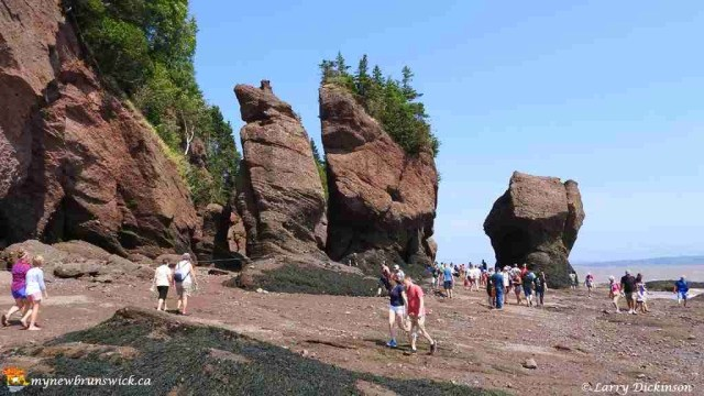 hopewell rocks 003