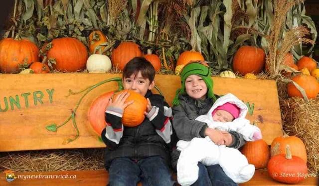 Pumpkin Harvest2015 087