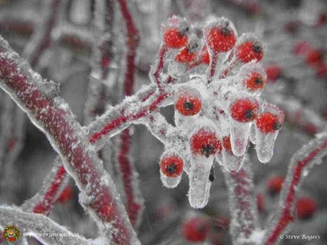 Ice storm dec201504