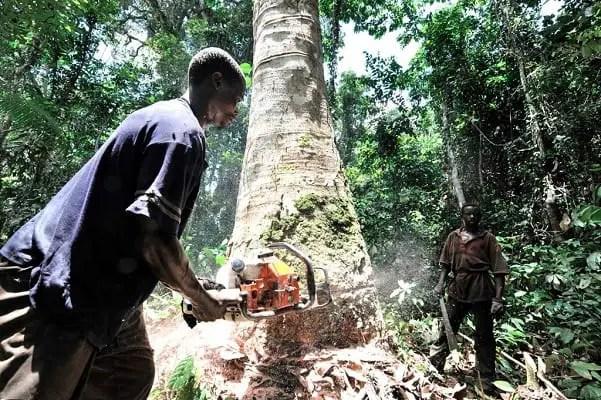 W/R: Chainsaw operator killed by falling tree