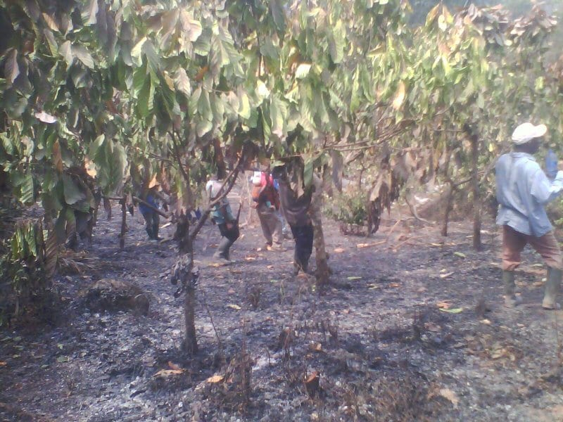 Angry Farmers Destroy Property of Forestry Commission
