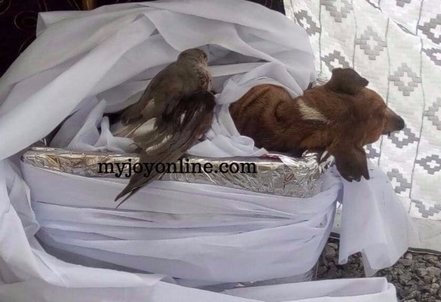 VIDEO:Funeral held for 23-year old dog in Volta Region