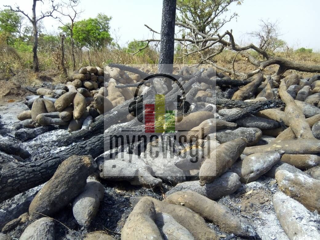 Over 5,000 tubers of yam burnt by hunters in Salaga