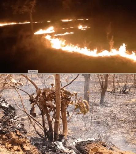We destroy soil biodiversity at our own peril