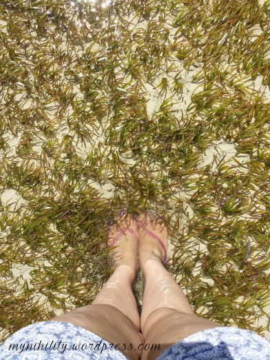 Walking on a bed of seaweeds