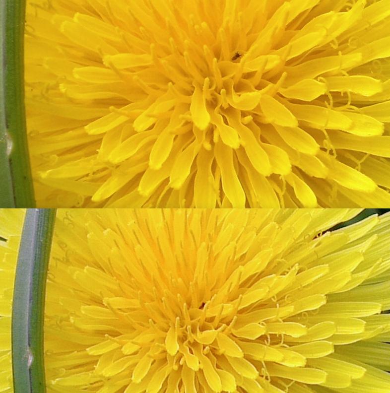 flowercomp