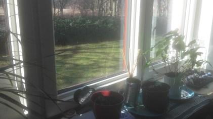 Il mio davanzale da un paio di settimane, germogli e piante che crescono più velocemente di quanto non mi sarei immaginata!