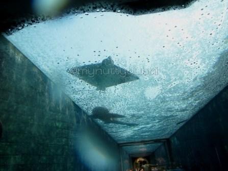 Ride going through the shark tank