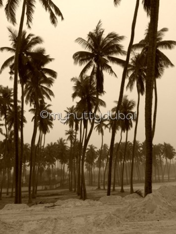 Love these coconut trees!