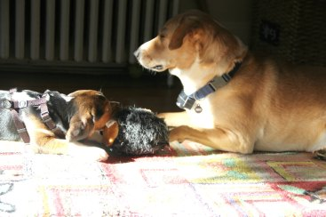 CHARLIE AND BEAN TAKE A SUNBATH