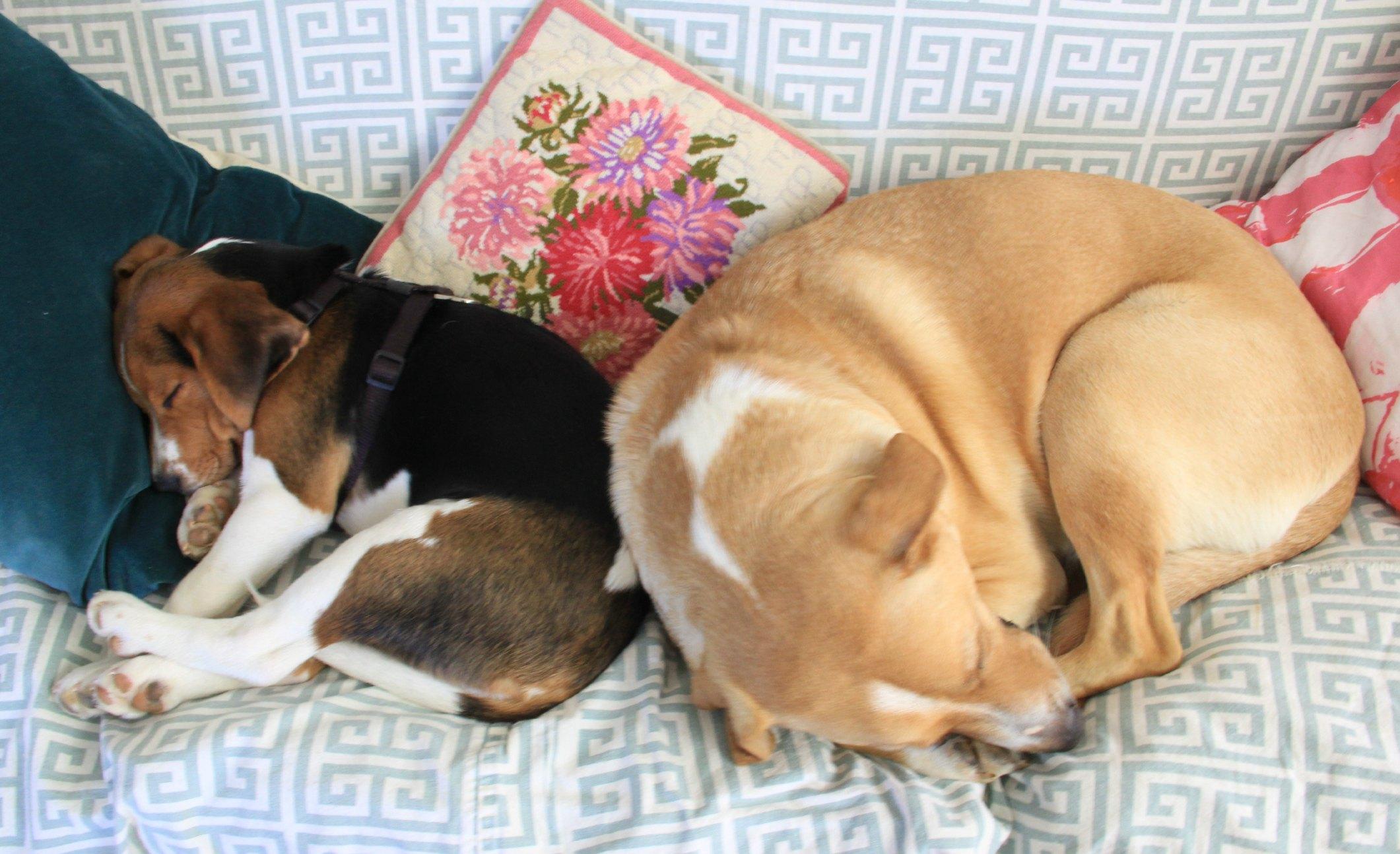 BEAN AND CHARLIE MAKE SLEEP LOOK SO GOOD