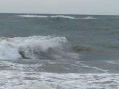 ESA Surf contest 1-1-12_1088