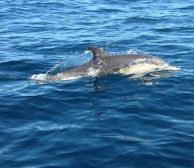 dolphin5