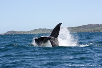 Whale Watching Trip Port Macquarie