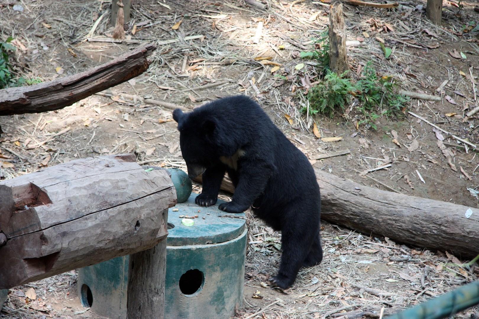 Bear rescue centre