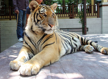 Thailand – Waterfalls & Tigers