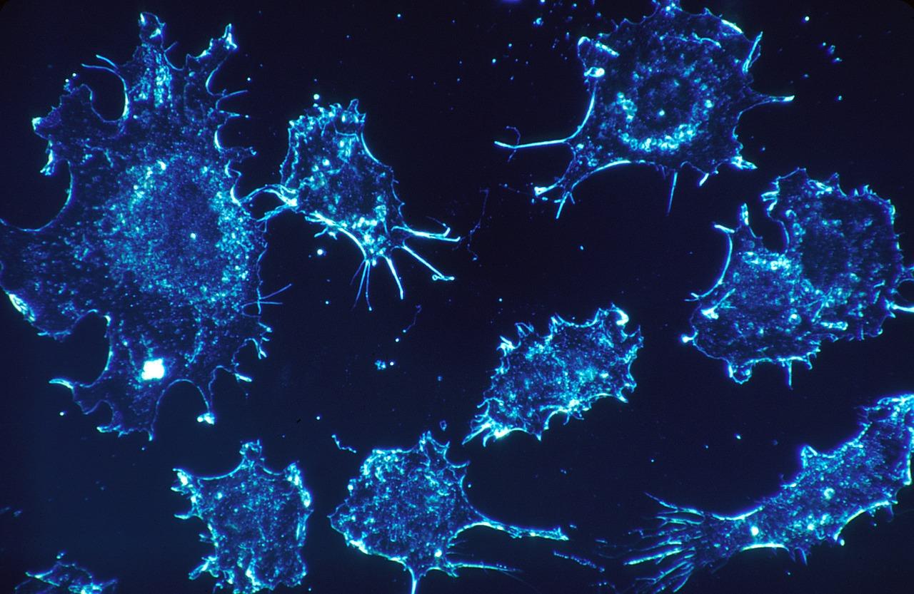 cancer-cells-541954_1280