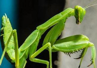 Locust 89475909823647801
