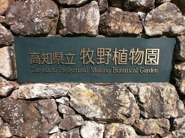 牧野植物園:高知市~是非訪れて欲しい隠れ観光スポット(大人推奨)