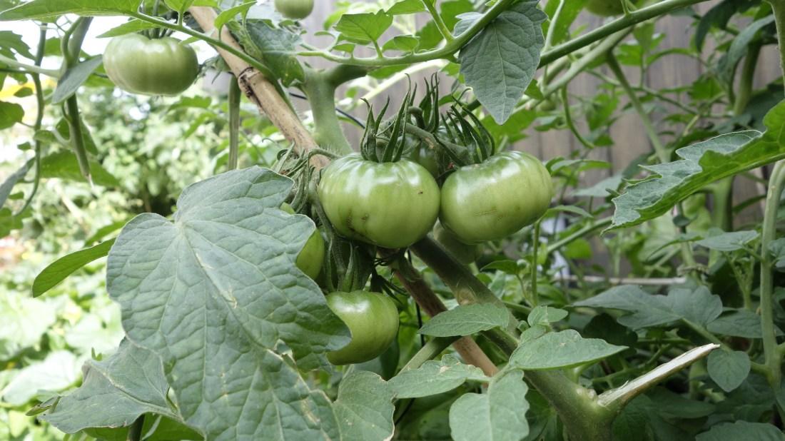 green tomatos mob hotel paris saint ouen