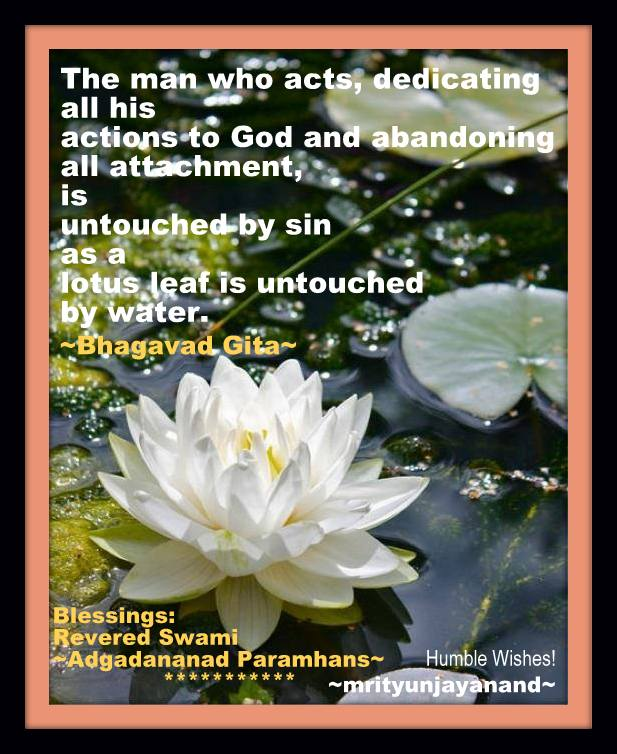 Lotus leaf is untouched by water....!!!