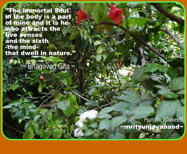 The immortal soul...!!!