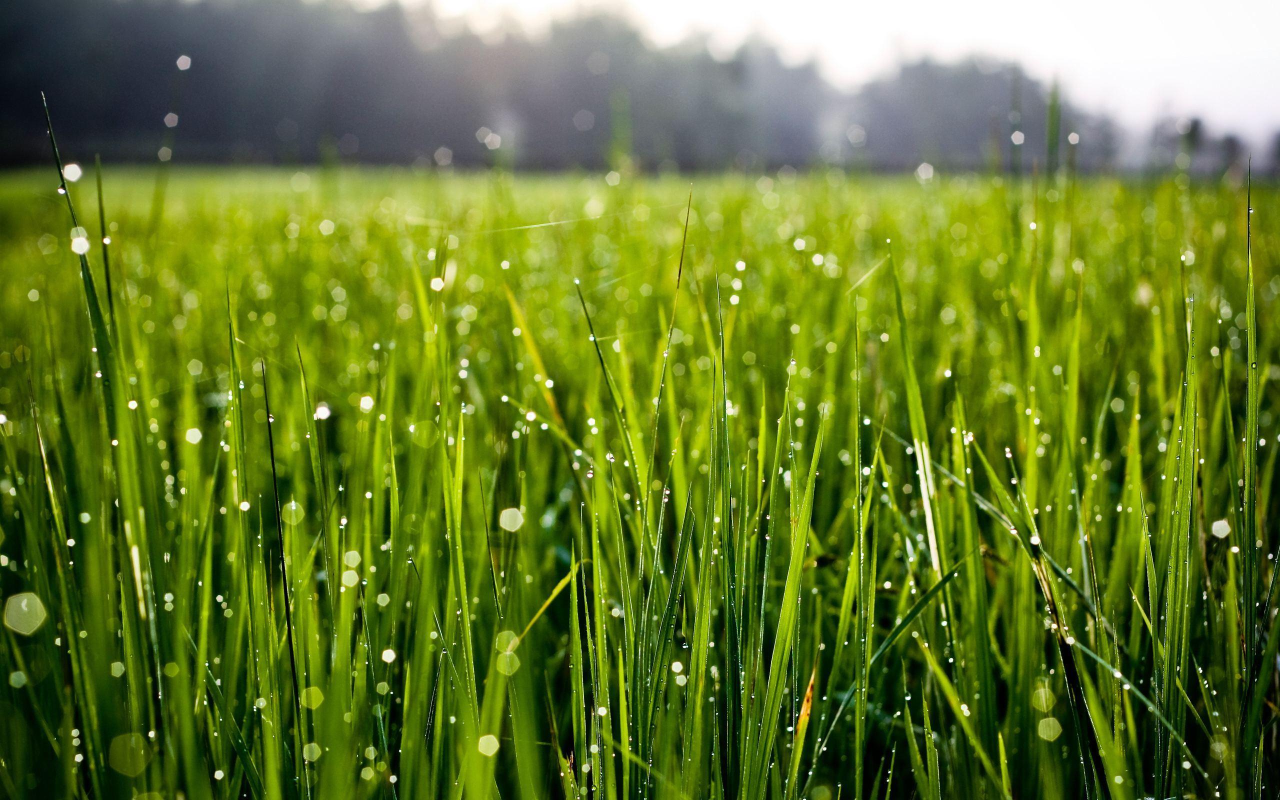 Image result for dew on grass image