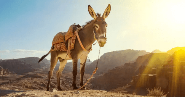 He's Just a Stubborn Donkey