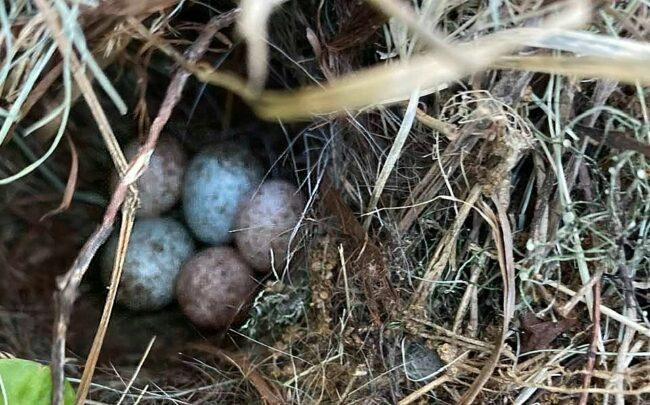 The Joys of Nesting