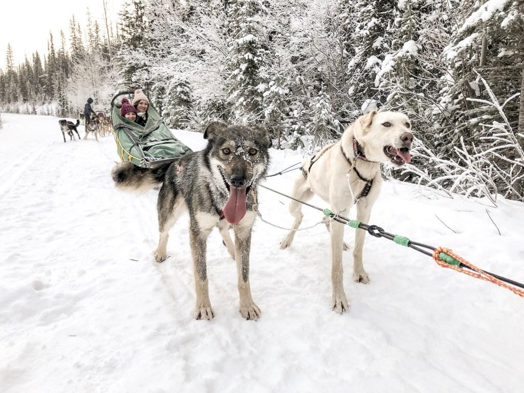 Kingmik Dog Sledding in Banff, Canada