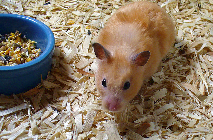 Hamster Cages 6 Step Checklist To Create The Perfect