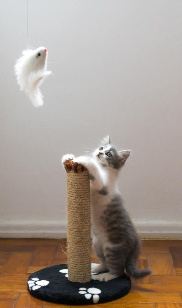 Image of a cat playing with a scratch post