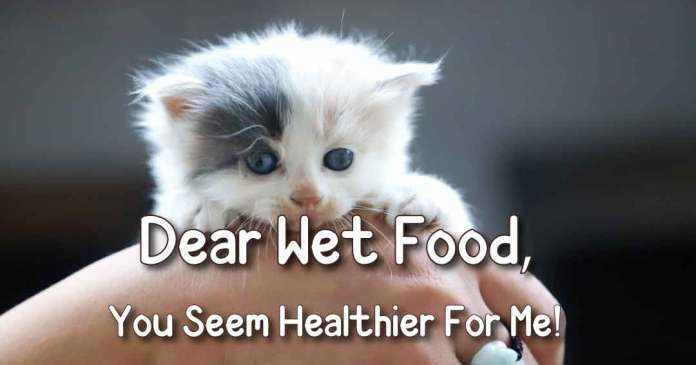 dear wet food, you seem healthier for me