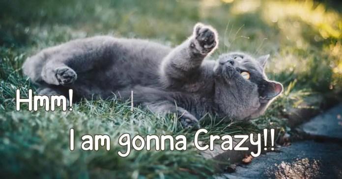 I am gonna crazy.