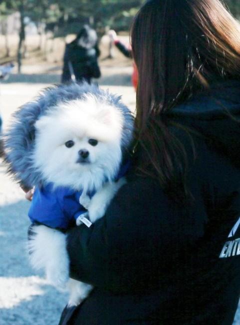 Korean Pets not Waste