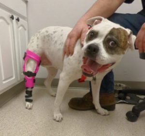 The Big Day Has Arrived – Brace Delivery at a My Pet's Brace Facility 1