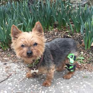 Frequently Asked Questions About Knee Braces From My Pet's Brace 2