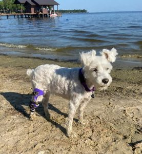 What To Do With Your Dog's Leg Brace While On Vacation 1