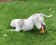 Hock Braces for Dogs
