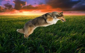 perro saltando en grama