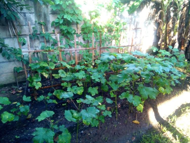 Our garden.....